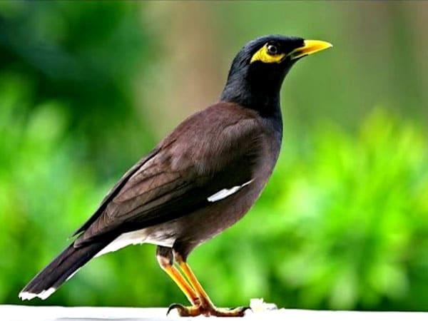 Nằm mơ thấy chim có ý nghĩa gì trong cuộc sống?