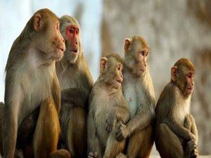 Mơ thấy khỉ là điềm báo gì, con số may mắn?