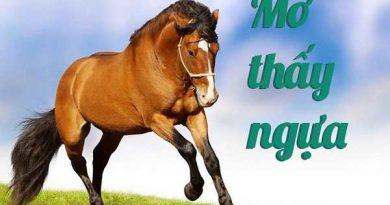 Ý nghĩa giấc mơ thấy con ngựa