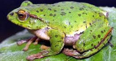 Nằm ngủ mơ thấy con ếch đánh đề con gì chắc trúng?