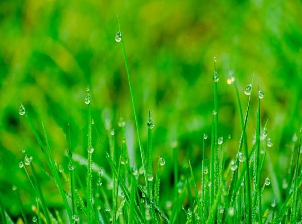 Mơ thấy cỏ đánh đề con nào? Mộng thấy cỏ có tốt không